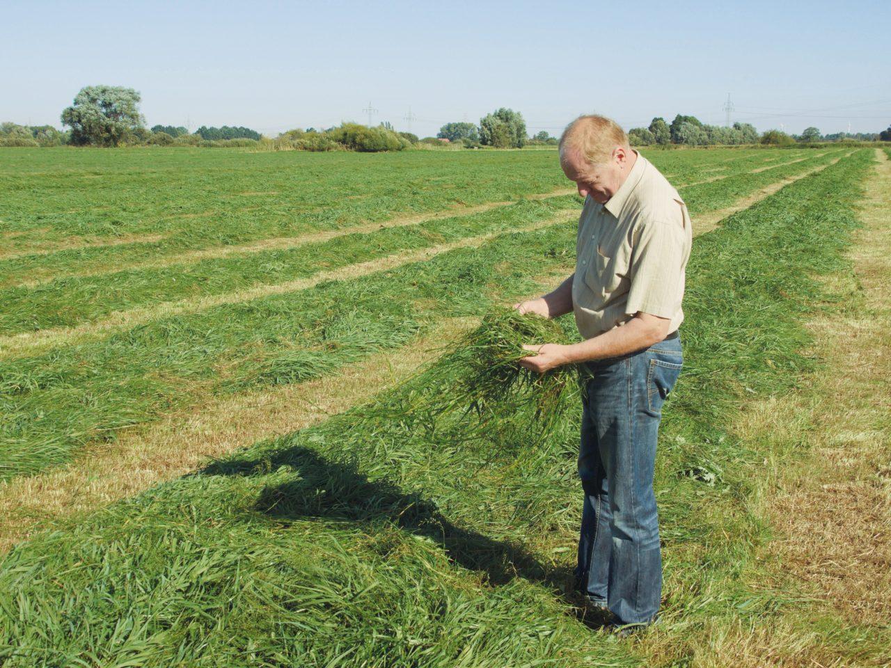 Inhaber Speers bei der Kontrolle der erntefrischen Heus auf den Naturwiesen