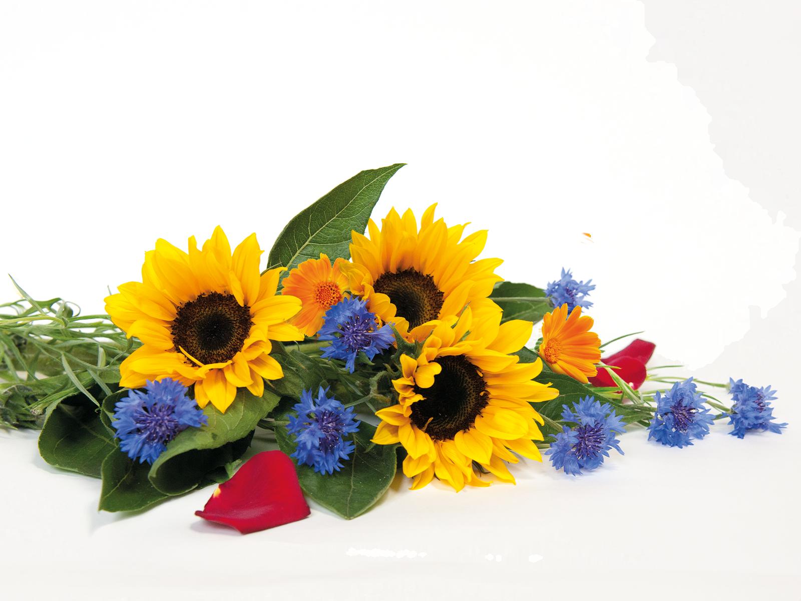 Wiesenblumen aus dem Produkt Snacks Blütenträume für Nager von Speers Hoff