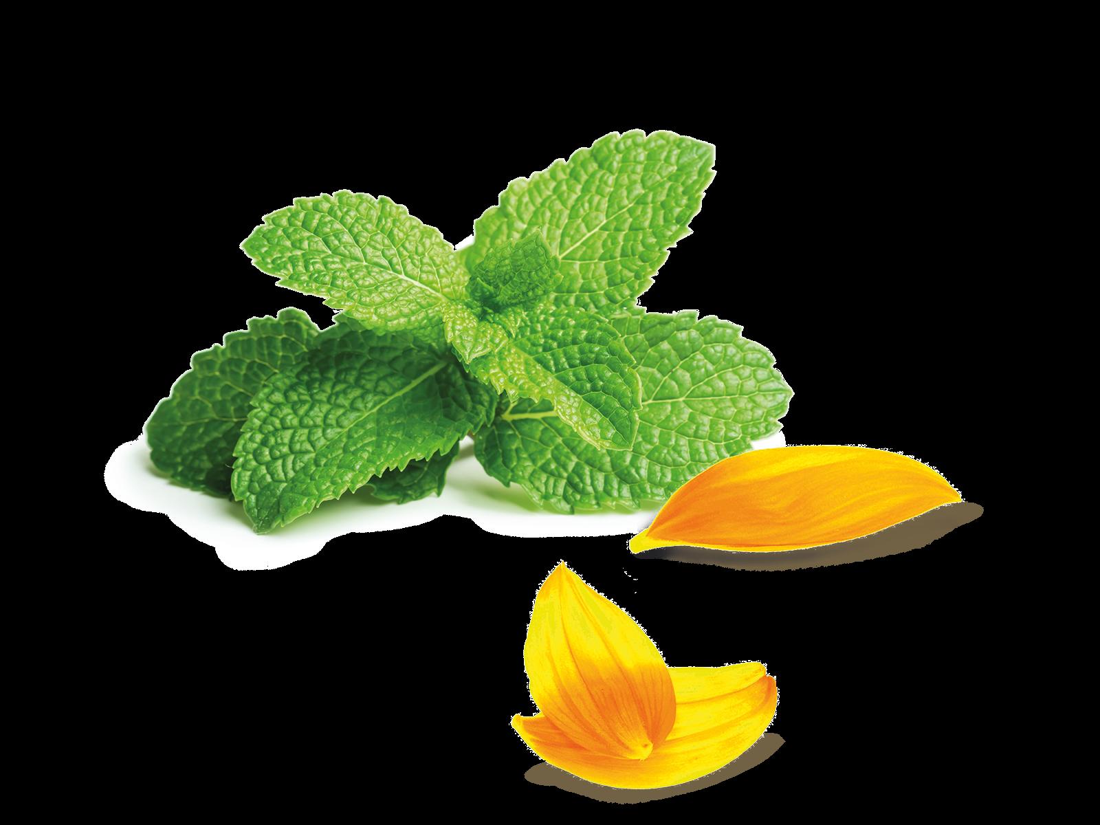 Pfefferminze und Sonnenblumenblätter aus dem Produkt Kräuter Pfefferminze + Sonne für Kaninchen und Meerschweinchen von Speers Hoff