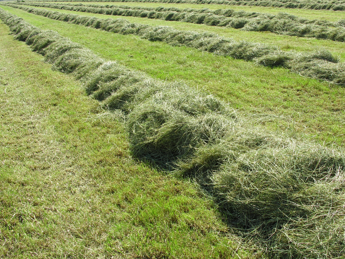 Das frischgemähte Gras trocknet unter freiem Himmel vor und wird dann auf den Hof von Speers Hoff gefahren.