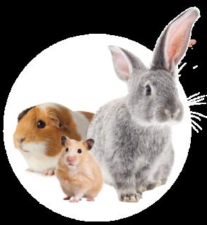 Freisteller Hasen, Hamster, Meerschweinchen von Speers Hoff